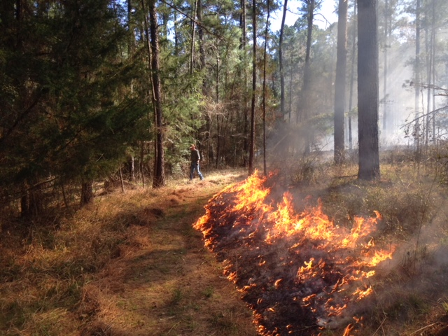 Prescribed fire is one of the most useful management tools. We will conduct a burn (weather permitting during the Field Day).